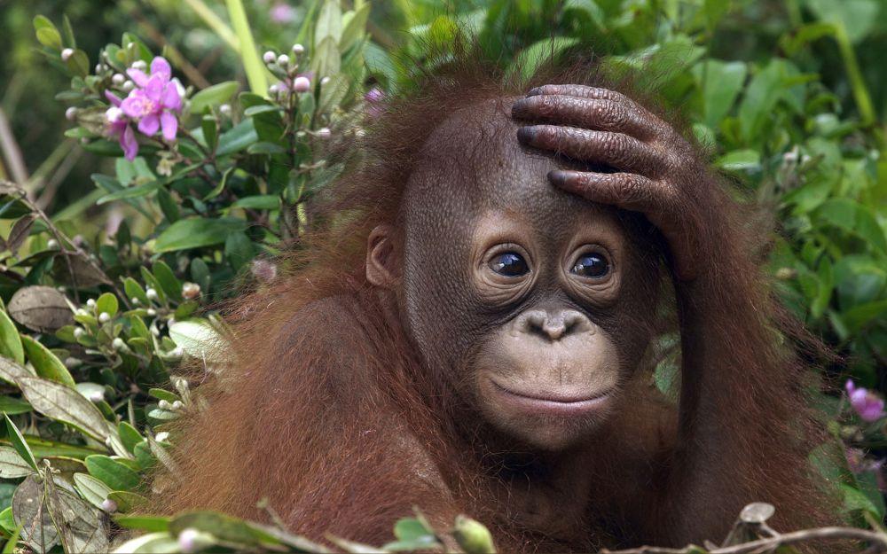 monkey_2016_03